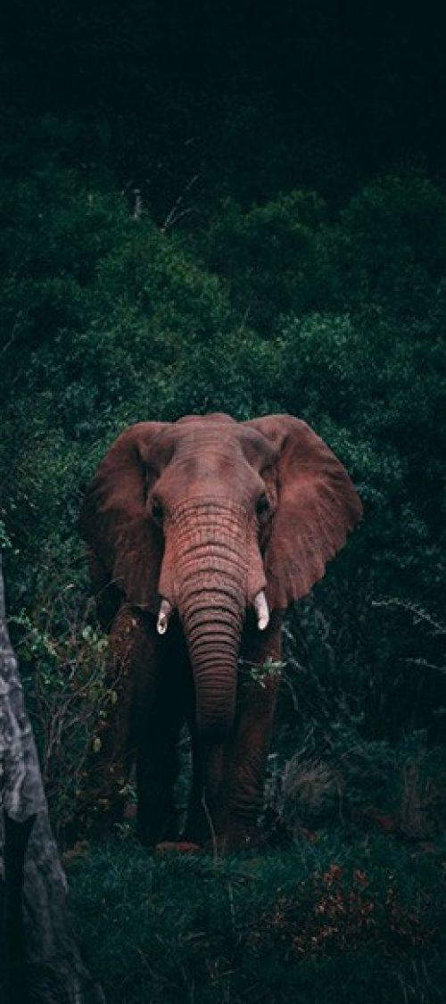 Wildlife and Adventure
